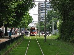 Más holland városokhoz hasonlóan a hágai külvárosokban is gyakran közlekedik füves pályán villamos., Hága (forrás: Sparing Dániel)