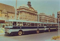Ikarus 556-os buszok a Március 15. téri végállomáson